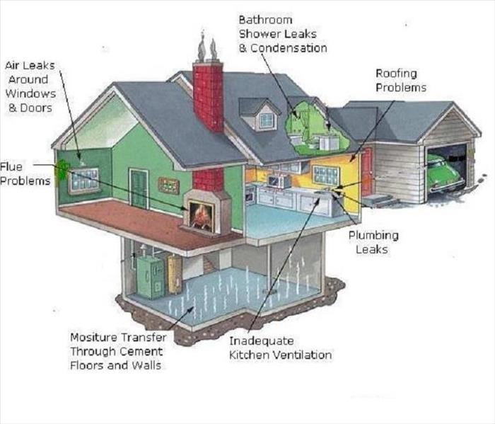 A Chart of Where Mold Might be Found