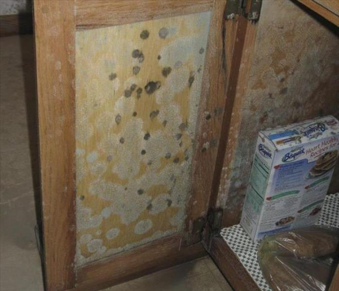 Mold Remediation How can I lessen the possibillity of mold in my house??