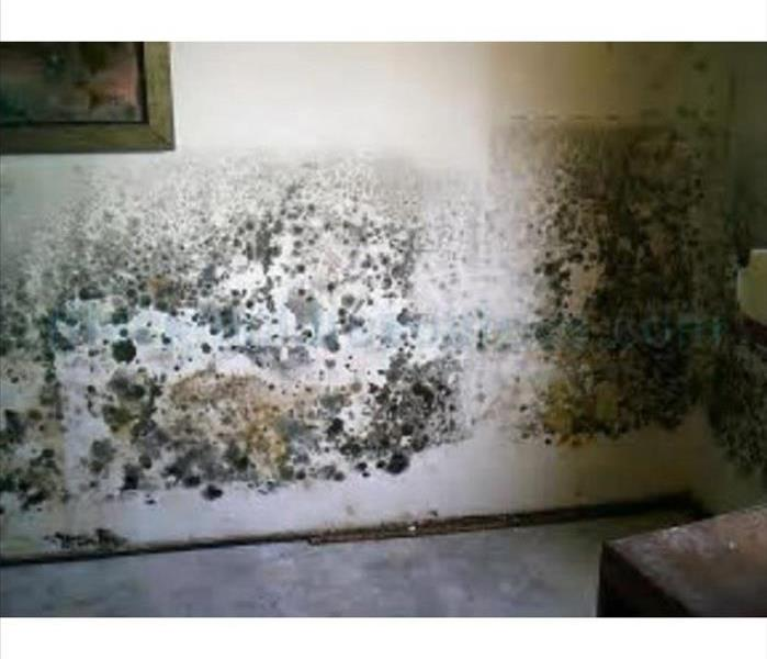 Mold Remediation Does your home smell musty?