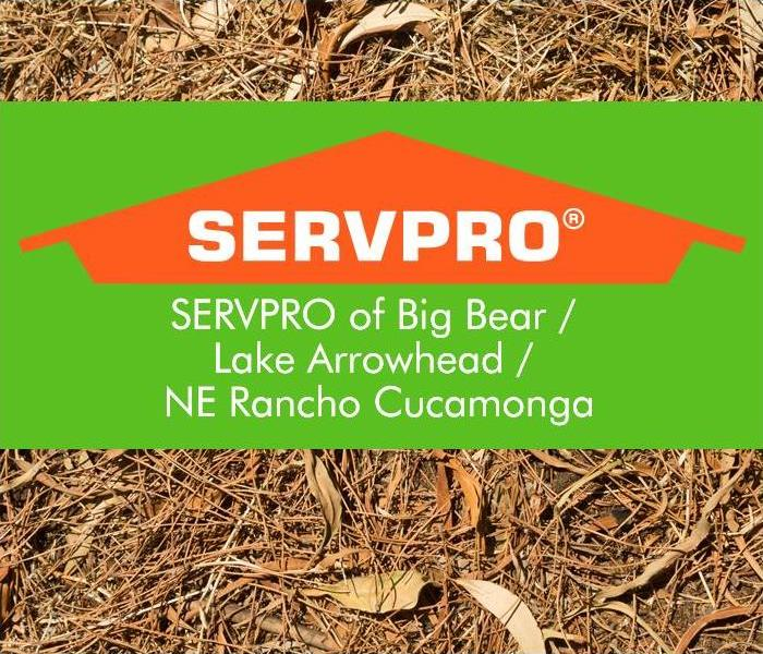 SERVPRO Logo with Pine Needle Background